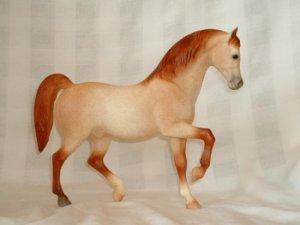 Family Arabian Stallion No Doubt