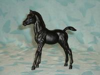 Family Arabian Black Foal (FAF)