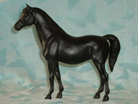 Family Arabian Black Mare