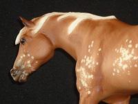 Indian Pony Full Speed
