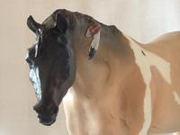 Indian Pony N'iekeni